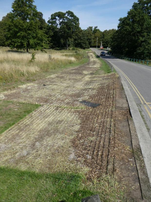 Tottenham Independent: Damage to the surface of the park