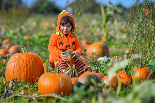 Khloe, aged two, from Bristol, rests among pumpkins at Farringtons Farm in Somerset