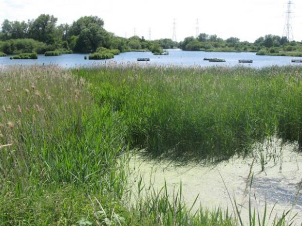 Tottenham Independent: Seventy Acres Lake - River Lee Country Park