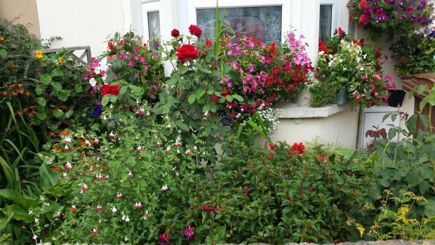Tottenham Independent: Sue Jewell's prize winning front garden (37766672)