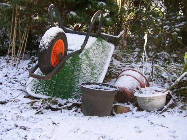 Tips to keep your allotment stocked and healthy over the winter